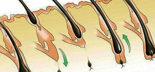 Направление роста - важный параметр для парикмахера