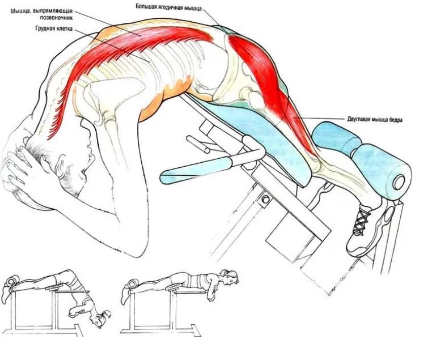 Простое упражнение при грыже поясничного отдела позвоночника: эффективное лечение гиперэкстензией