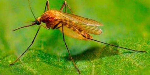 защита дома от комаров