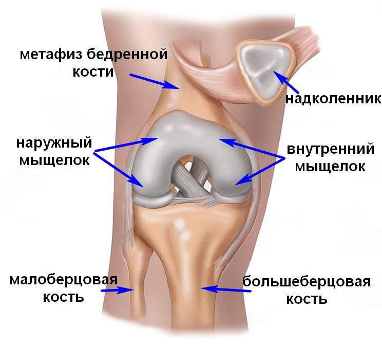 Мыщелок коленного сустава