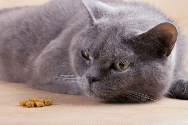 отсутствие аппетита у кота