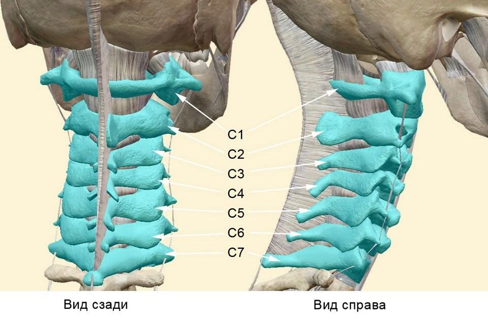Грыжа с4 с5 шейного отдела позвоночника: что провоцирует опасную болезнь с обычными симптомами?
