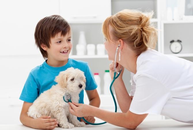 Обследование щенка у ветеринара