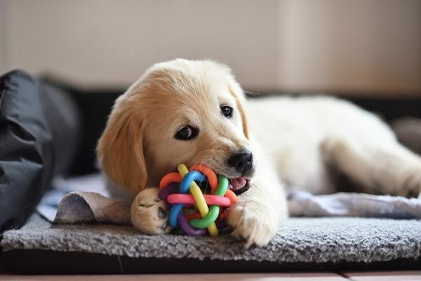 отвлечение собаки игрушкой