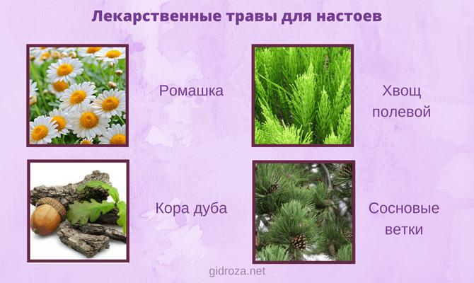 Лекарственные травы для настоев