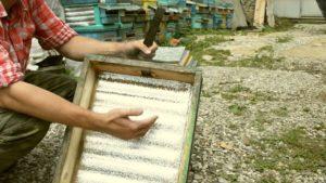 Как начать заниматься пчеловодством для начинающих