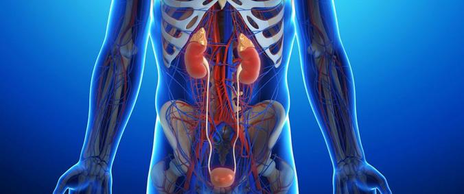 В каких частях брюшной полости могут образоваться кисты
