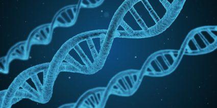 Генетическая предрасположенность увеличивает шансы заболеть