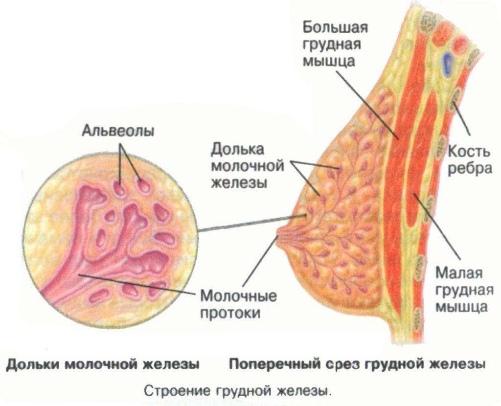 грибок под молочными железами