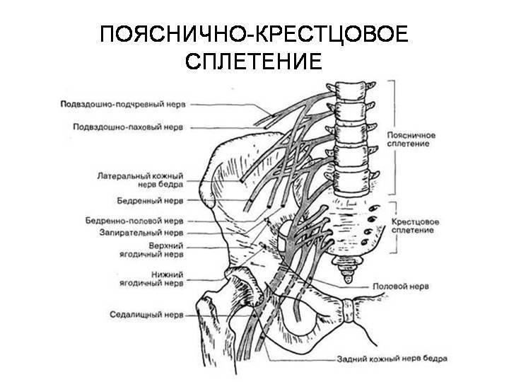 Невралгия таза