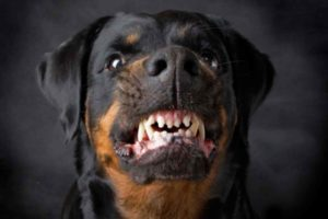профилактика от укуса собак