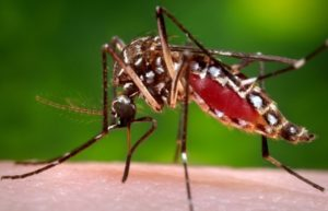 опасность комара