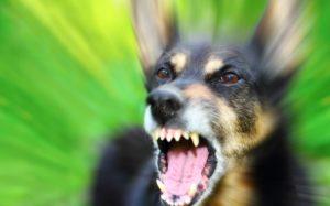 укус бешенной собаки