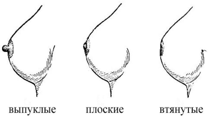 Формы сосков