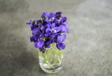 Даже такие красивые цветы как фиалки могут поспособствовать выздоровлению